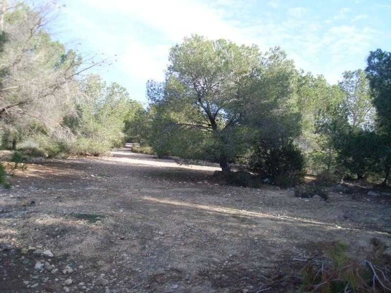 Property land/forestry for sale San Miguel De Sali,  San Miguel De Salinas, Ισπανία