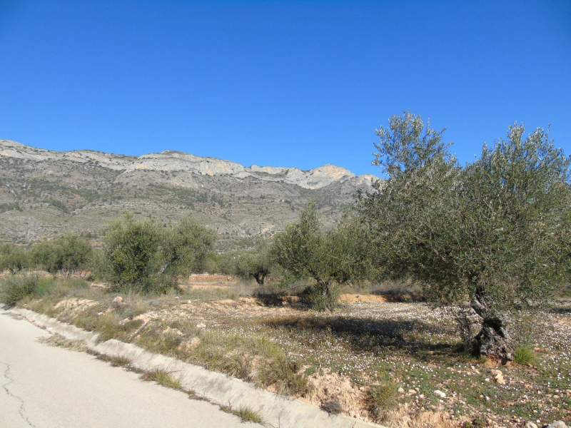 Property land/forestry for sale Gaianes/Alicante,  Gaianes, Spain