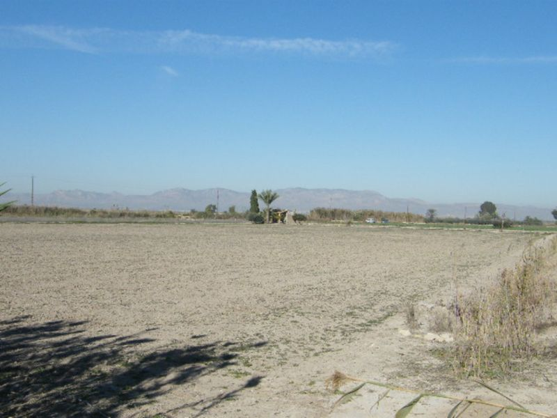 Property land/forestry for sale Elche/Alicante,  Elche, Spain